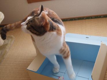ヤムママさん便3