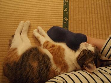 足枕で眠る小梅1