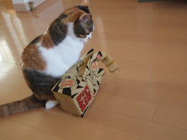 Purikoさんのおもちゃ6