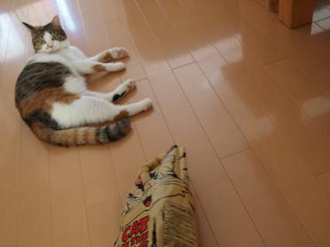 Purikoさんのおもちゃ11