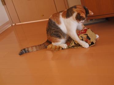 Purikoさんのおもちゃ8