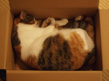 やっぱり箱が好き2