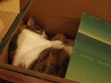 やっぱり箱が好き1