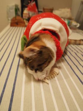 クリスマスプレゼントその2-5