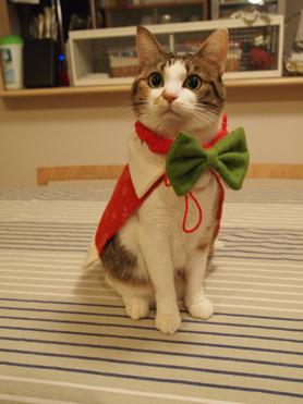 2010クリスマス4