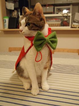 2010クリスマス1