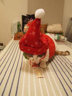 2010クリスマス9