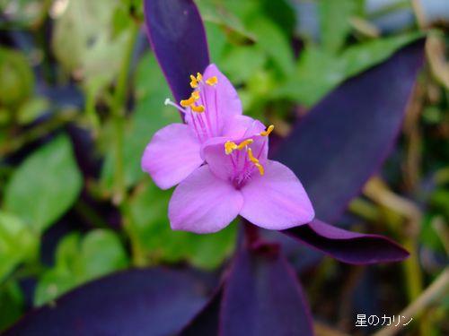 紫御殿」 1