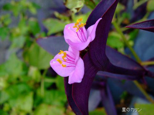 紫御殿」 2