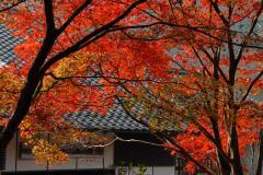 昨年、高源寺の紅葉です