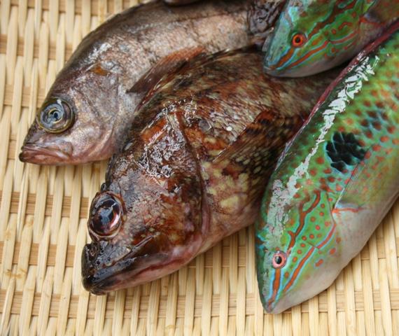 IMG_5067 魚の顔 W