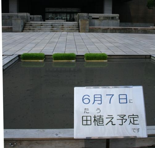IMG_5035 市役所田んぼ W