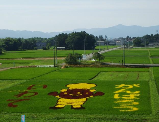 DSCF1637 田んぼのアート W
