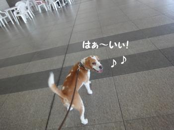 pet_haku2010 004_1
