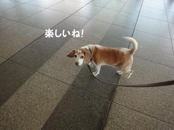 pet_haku2010 003_1