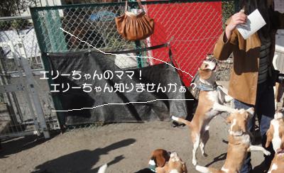 lemon-beagle3 079_1