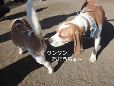 lemon-beagle3 012_1