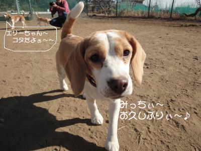 lemon-beagle3 059_2