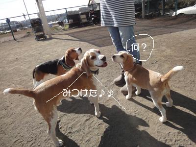 lemon-beagle3 174_1