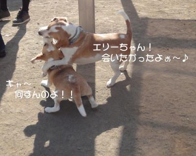 lemon-beagle3 209_1