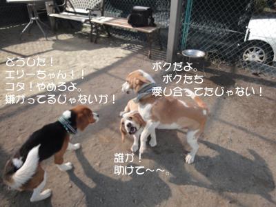 lemon-beagle3 218_1