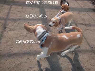 lemon-beagle3 219_1