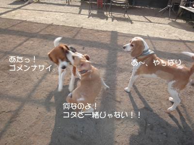 lemon-beagle3 221_1
