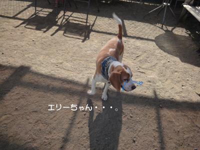 lemon-beagle3 224_1
