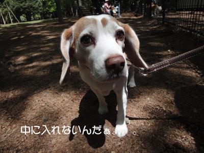 yoyogi 015_1