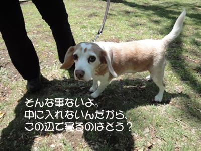 yoyogi 008_1