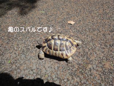 yoyogi 019_1