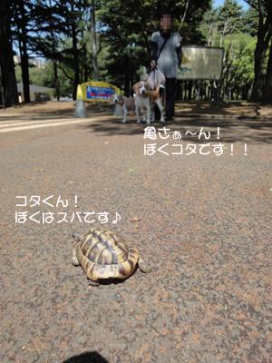 yoyogi 020_1