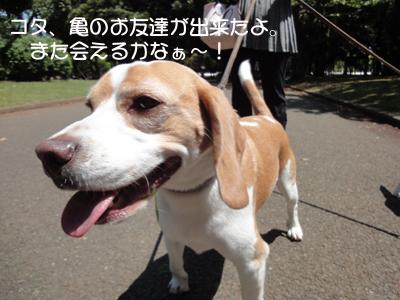 yoyogi 004_1