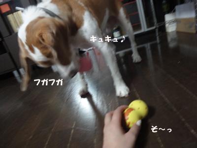 tsuru 043_1