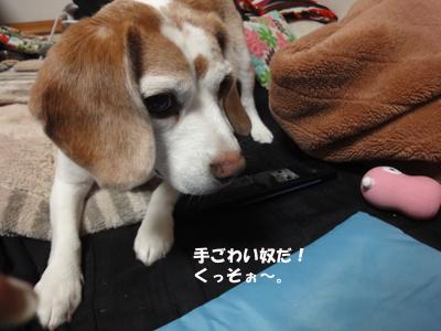 tsuru 053_1