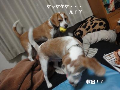 tsuru 058_1