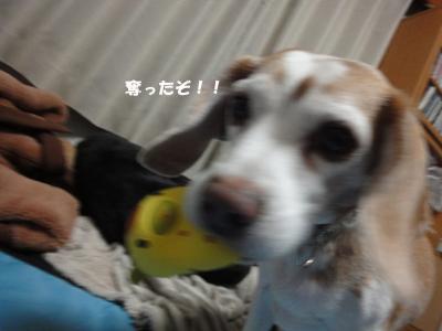 tsuru 066_1