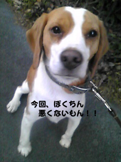 Image080_1.jpg
