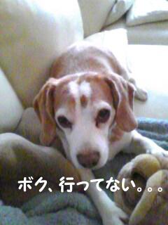 Image114_1.jpg
