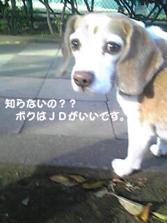 Image187_1.jpg