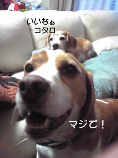 Image2154_1.jpg