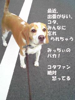 Image318_1.jpg