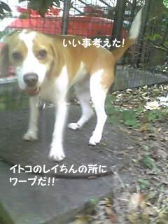 Image328_1.jpg
