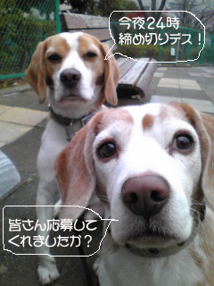 Image341_1.jpg