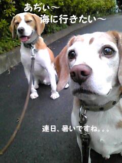 Image359_1.jpg