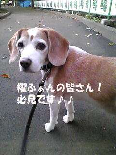 Image719_1.jpg