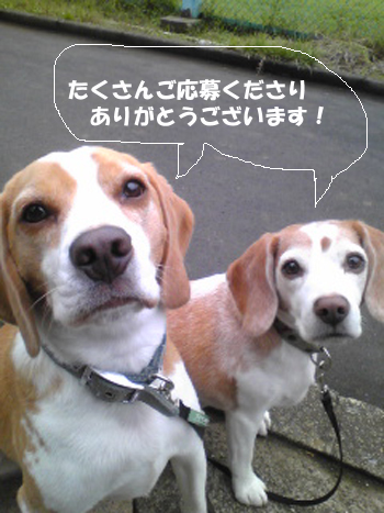 Image953_1.jpg