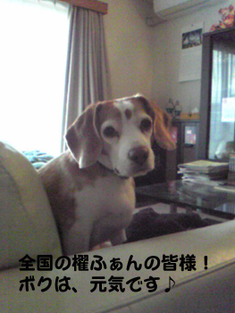 Image994_1.jpg