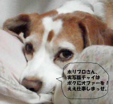 NEC_0206_1.jpg