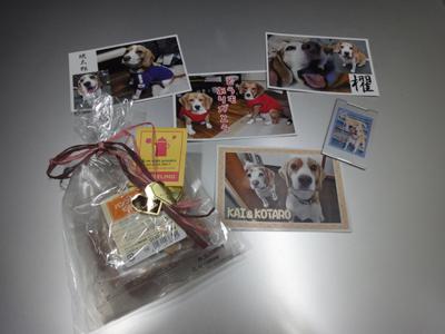 beagle-love4.jpg